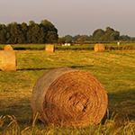 Bando Agricoltura-vivilanotizia 1