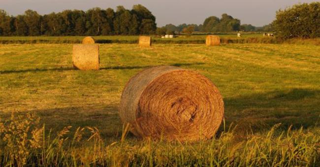 Bando Agricoltura-vivilanotizia
