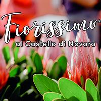 fiorissimo-castello-di-novara-vivilanotizia 1