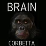 Brain 1-vivilanotizia